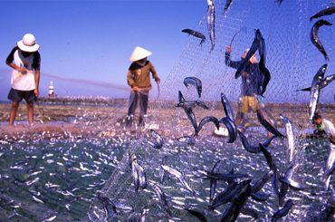 Cá cơm Phú Quốc